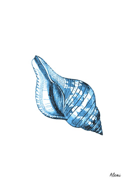 Blue Shell Marine Illustration