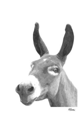 Black and White Donkey