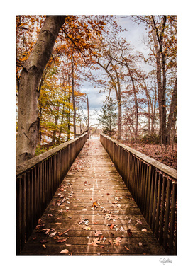 Path to the Water in Fall
