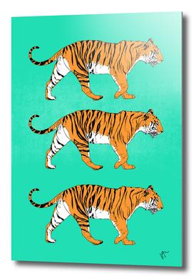 TIGER-TRIO WALKING-MOOD