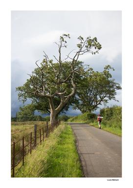 Cool tree