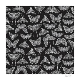 Lepidoptera Black