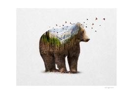 Wild I Shall Stay | Bear