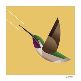 Eulidia yarrellii a.k.a. Picaflor de Arica