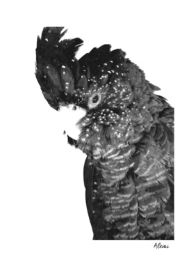 Black and White Cockatoo Illustration