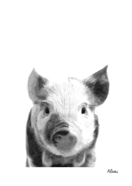 Black and White Pig Portrait