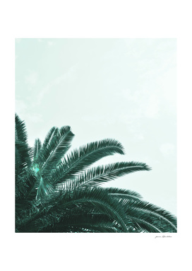 Palm Tree Leaves