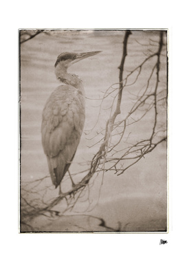 Vintage fauna: Heron
