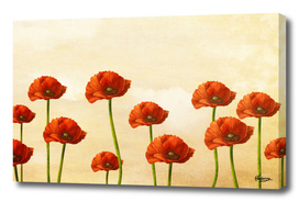 Where The Poppies Bloom