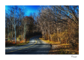 Afternoon light on a country road