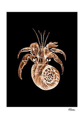 Shellfish black background