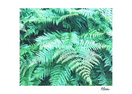 Fern Tropical Leaves