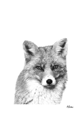 Black and White Fox