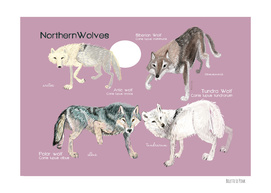 Northern Wolves (Canis lupus)