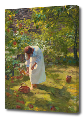 In the fruit orchard