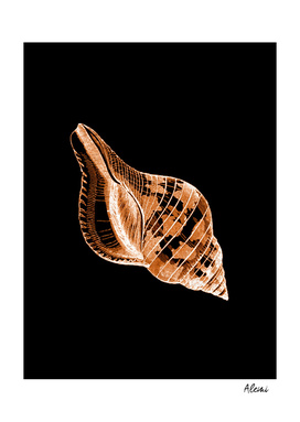 Shell Black Background