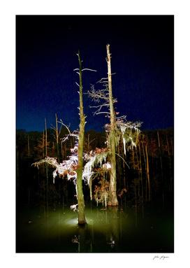 Night on the bayou
