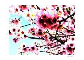 Sakura IX