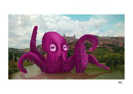 Octopus in Toledo