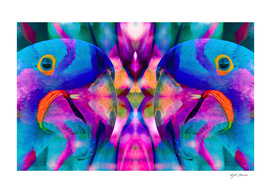 Colorful  Hyacinth Macaw