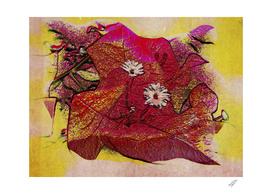 Red Bougainvillea Abstract Deekflo