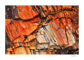 Orange Petrified Wood