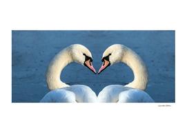 Heart-shaped swans