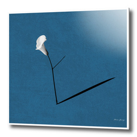 minimalist flower1