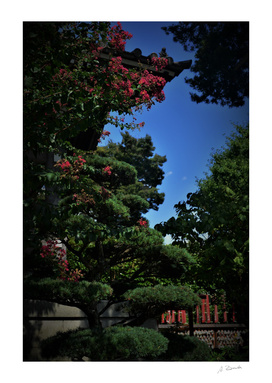 Trees in the Sensoji temple, Tokyo, Japan
