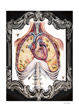 The Bee's Reverie - Anatomical Heart + Lungs