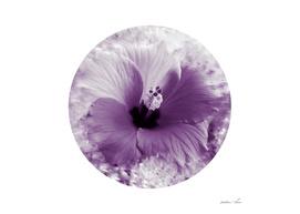 Hibiscus Hotty