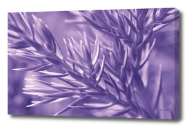 Ultra Violet Pine Tree   Trendy color of year 2018