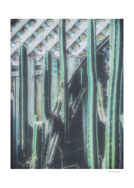 green cactus with wooden fence background