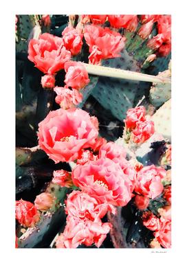 pink cactus flower in the desert