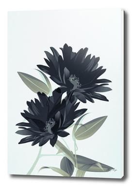 flowers / 39