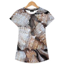 Seashells. Texture.