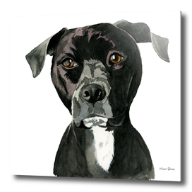 """""""Contemplating"""" Pit Bull Dog Painting"""