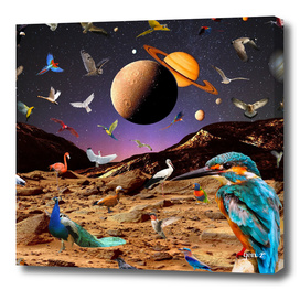 Paradise Birds by GEN Z