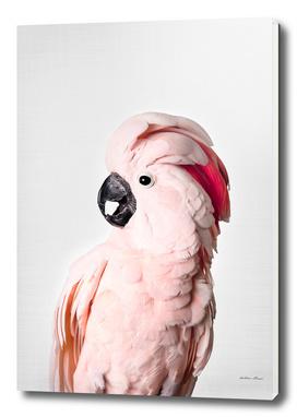 pink cockatoo