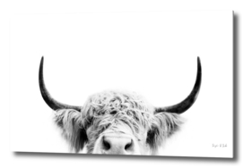 Peeking Cow BW