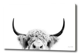 Peeking Cow BW