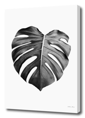 Monstera Leaf BW