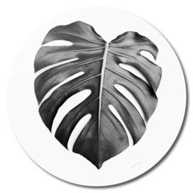 Monstera Leaf BW