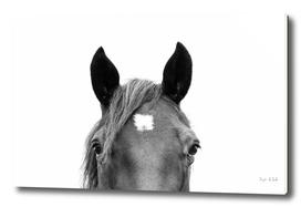 Peeking Horse