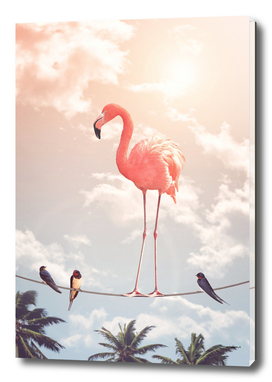 FLAMINGO & FRIENDS