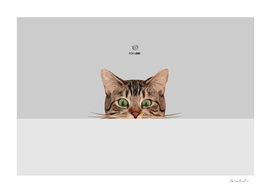 Cat on Gray