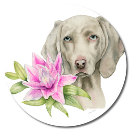 """Innocence"" 