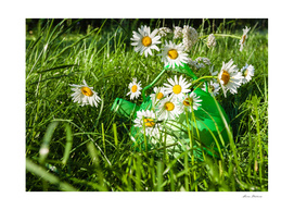 Summer day, green grass daisies countryside