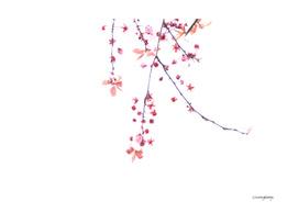 Cherry Blossom Minimalism