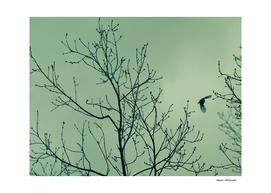 Bird in the sky green